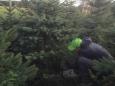 Weihnachtsbaumverkauf_007